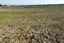 اقتصاد کشاورزی تنکابن دچار نگرانی جدی است