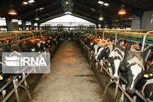 ظرفیت تولید گوشت در گرمی مغان افزایش یافت