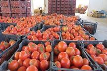 274 تن گوجه فرنگی قاچاق در مریوان کشف و ضبط شد
