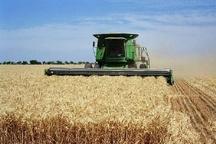 آغاز برداشت گندم در خوزستان  تدارک ۴۰ میلیون لیتر سوخت برای ماشین آلات برداشت کننده