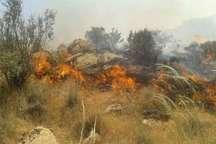 رئیس اداره منابع طبیعی:تلاش برای مهار آتش سوزی جنگل های کوهدشت ادامه دارد