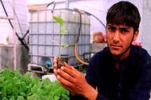 ترویج کشت نشاء راز بقای آب در کشاورزی جنوب کرمان