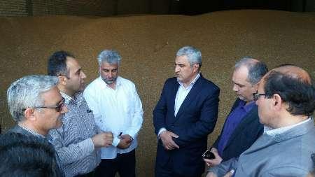 20 هزار تن گندم در نمین خریداری شد ؛ پیش بینی خرید 40 هزار تن