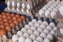 7400 تن تخم مرغ در قزوین تولید شد