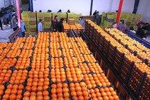 950 تن سیب و پرتقال ویژه نوروز در سمنان آماده توزیع است