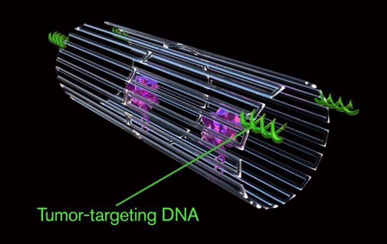 وقتی نانوربات ها سلول های توموری را از بین می برند + فیلم