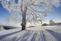 بارش 20 سانتی متری برف در گلستان