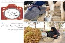 موفقیت عکاس دشتی بوشهر درجشنواره ملی عکس قاب بی رنگ