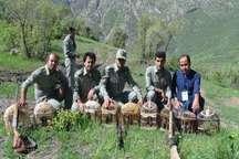 دستگیری هفت شکارچی متخلف کبک  رها سازی 9 کبک در دامان طبیعت
