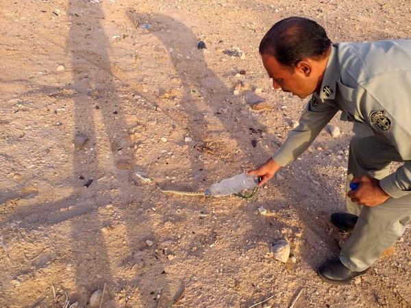 بازگشت افعی شاخدار به دامان طبیعت  سیستان و بلوچستان