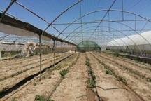 مشکل گازرسانی، اجرای طرح های گلخانه ای قزوین را کند کرده است