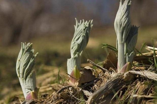 باغ گیاه شناسی در کهگیلویه و بویراحمد ایجاد می شود