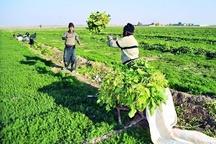 حفاظت و صیانت از اراضی کشاورزی تضمینی برای اشتغال است