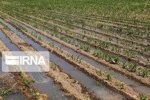 ۲ هزار و ۷۰۰ هکتار از مزارع و باغات سروآباد آبی میشود