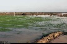 سیل 760 میلیارد ریال به کشاورزی اصفهان خسارت زد