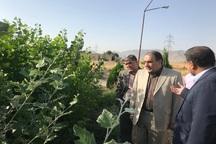 لزوم تسریع در تدوین سند توسعه کشت گیاهان دارویی استان مرکزی