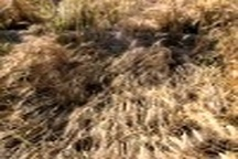 خسارت بیش از ۳ میلیارد ریالی بخش کشاورزی در شهرهای شمالی خوزستان
