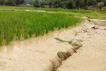 سیل 1181میلیارد ریال به کشاورزی خراسان رضوی خسارت زد