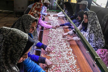 765 فرصت شغلی با ارایه تسهیلات روستایی در قزوین ایجاد شد