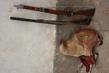 چهار شکارچی متخلف در شهرستان قزوین دستگیر شدند