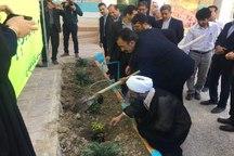 چهار هزار اصله نهال در دیر توزیع شد