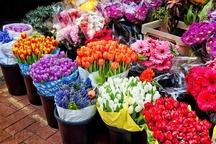 صادرات 2هزار گلدان گل و گیاه زینتی از نوشهر به خارج کشور