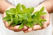 گیاهان دارویی؛ دم کردن کشت های ثروت آفرین