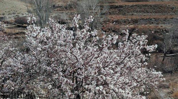 جریانات شمالی و جنوبی خواب زمستانی درختان استان را برهم زد