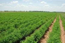 12 شرکت فنی مهندسی قم در طرح پهنه بندی کشاورزی فعالیت دارند