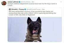 یک خبرنگار خوشحالی توییتری ترامپ را خراب کرد! + عکس