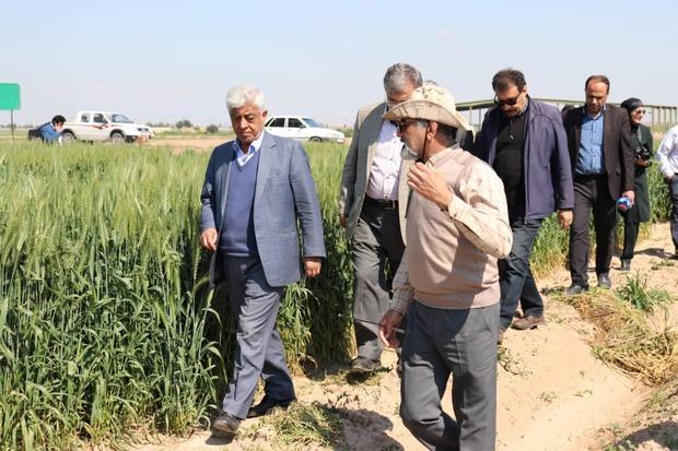 یک میلیون و 460 هزار تن کود اوره در کشور توزیع شد