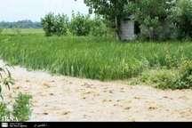 سیلاب به مزارع سبزوار خسارت زد