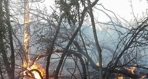 آتش سوزی اراضی ملی آستارا توسط جنگلبانان مهار شد