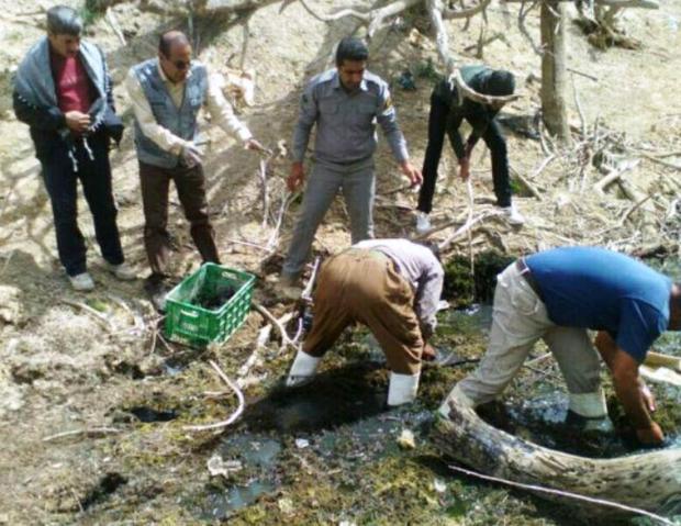 450 لاکپشت درمرودشت از عواقب خشکسالی نجات یافتند