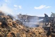 انبار دامداری با 24 تن کاه و یونجه در نیشابور طعمه حریق شد