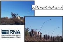 سربرداری درختان نارون در کرمان راهی برای مبارزه با آفات