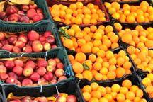 202 تن سیب و پرتقال شب عید در دماوند توزیع می شود