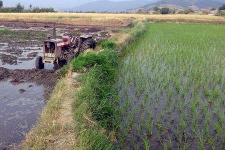 بحران کم آبی گلستان و اشتیاق بالای کشاورزان برای کشت شالی