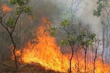 180 هکتار از جنگلهای و مراتع گچساران در آتش سوخت