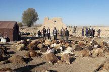 1350 دام سبک و سنگین در زلزله آذربایجانشرقی تلف شد