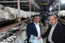 55 درصد قارچ آذربایجان شرقی در واحدهای کوچک تولید می شود