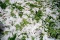 بارش شدید تگرگ در سمنان  شهروندان سمنانی غافلگیر شدند