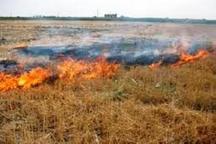 هفت هکتار از مزارع گندم شهرستان شازند در آتش سوخت