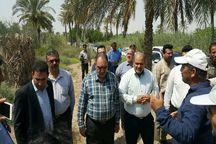 خشکسالی و شوری آب به بخش کشاورزی آبادان و خرمشهر خسارت زد