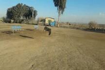 رها سازی 2 پرنده شکاری عقاب و سارگپه در پارک ملی کرخه