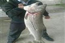 جریمه هفتاد و پنج میلیون تومانی برای  یک صیاد که ماهی آزاد  صید کرده بود