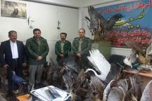 90 قطعه پرنده تاکسیدرمی از شکارچی متخلف آملی کشف شد