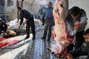 ۵ تیم دامپزشکی بروجرد بر ذبح دام زنده در عید قربان نظارت می کنند