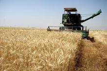 سیاست حمایتی بخش کشاورزی با جدیت بیشتری در کردستان اجرا شود