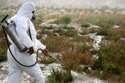 61 هزار هکتار از اراضی جنوب کرمان سم پاشی شد